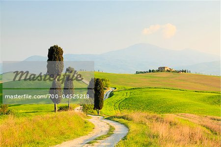 Cypress Trees and Dirt Road, Pienza, Val d'Orcia, Tuscany, Italy Stock Photo - Rights-Managed, Image code: 700-04525218