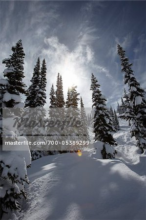 Snow Covered Trees, Whistler Mountain, Whistler, British Columbia, Canada Stock Photo - Rights-Managed, Image code: 700-05389299