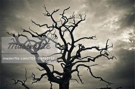 Branches of Dead Tree Against Cloudy Sky Stock Photo - Rights-Managed, Image code: 700-05452217