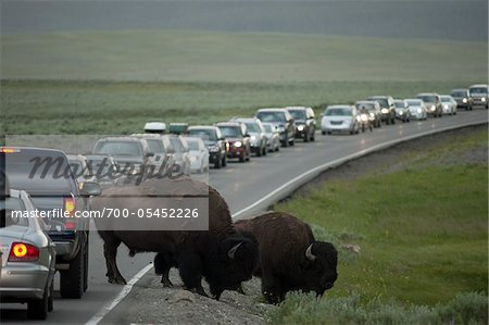 Buffalo Causing Traffic Jam, Yellowstone National Park, Wyoming, USA Stock Photo - Rights-Managed, Image code: 700-05452226