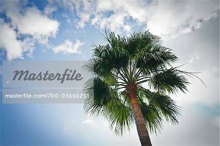 Palm Tree, Monaco, Cote d'Azur Stock Photo - Rights-Managed, Image code: 700-05560281