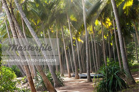 Sunrays Through Palm Trees, Amanwella Hotel, Tangalle, Sri Lanka Stock Photo - Rights-Managed, Image code: 700-05642159