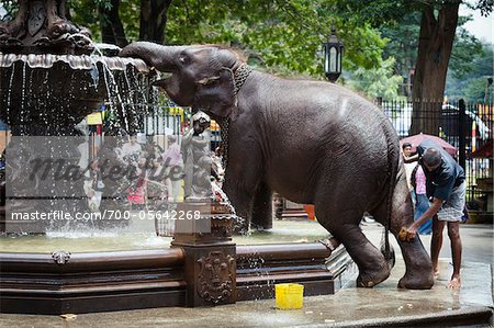 Elephant Being Washed in Public Fountain before Perahera Festival, Kandy, Sri Lanka Stock Photo - Rights-Managed, Image code: 700-05642268