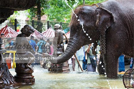 Elephant in Public Fountain prior to Perahera Festival, Kandy, Sri Lanka Stock Photo - Rights-Managed, Image code: 700-05642269