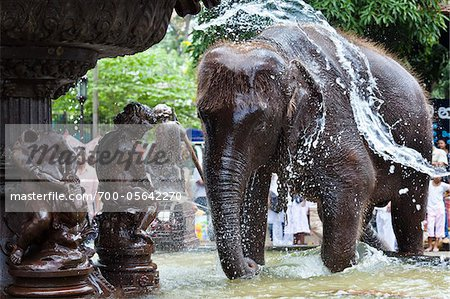 Elephant Being Washed in Public Fountain before Perahera Festival, Kandy, Sri Lanka Stock Photo - Rights-Managed, Image code: 700-05642270