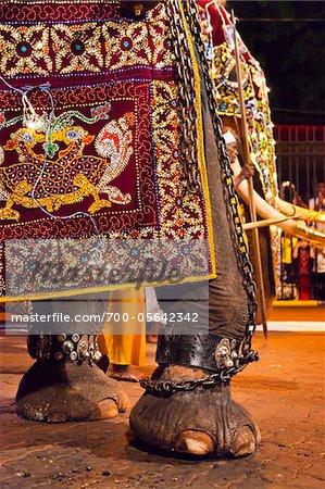 Elephant at Esala Perahera Festival, Kandy, Sri Lanka