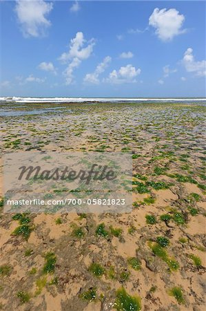 Seaweed on Beach, Pipa Beach, Rio Grande do Norte, Brazil Stock Photo - Rights-Managed, Image code: 700-05821823
