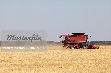 Combine Harvesting Oats, Starbuck, Manitoba, Canada Stock Photo - Rights-Managed, Image code: 700-05973211