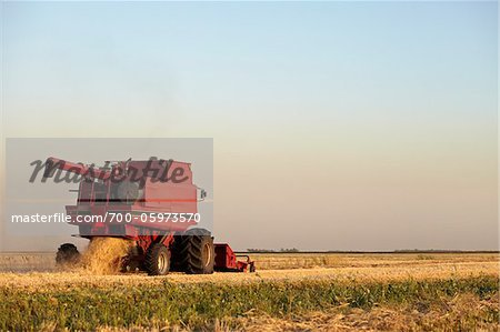 Axial-Flow Combines Harvesting Wheat in Field, Starbuck, Manitoba, Canada Stock Photo - Rights-Managed, Image code: 700-05973570