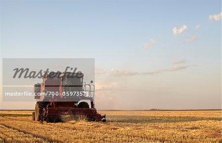 Axial-Flow Combines Harvesting Wheat in Field, Starbuck, Manitoba, Canada Stock Photo - Rights-Managed, Image code: 700-05973571