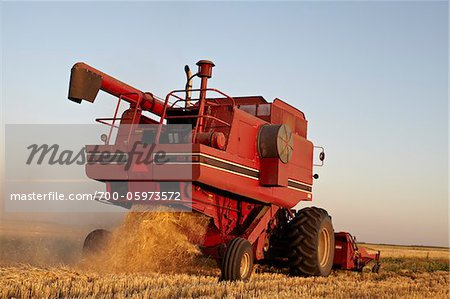 Axial-Flow Combines Harvesting Wheat in Field, Starbuck, Manitoba, Canada Stock Photo - Rights-Managed, Image code: 700-05973572