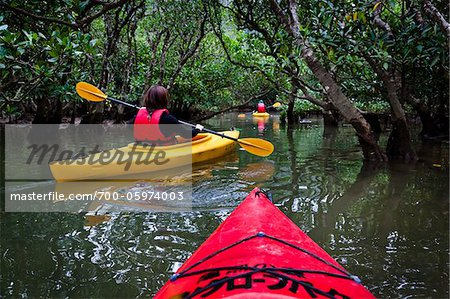 Kayaking at Kuroshio No Mori, Mangrove Park, Amami Oshima, Amami Islands, Kagoshima Prefecture, Japan Stock Photo - Rights-Managed, Image code: 700-05974003