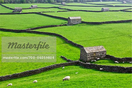 Sheep and Stone Barns, Swaledale, Yorkshire Dales, North Yorkshire, England Stock Photo - Rights-Managed, Image code: 700-06059804