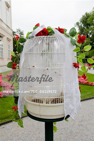 White Wedding Doves in Birdcage Stock Photo - Rights-Managed, Image code: 700-06119572