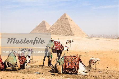 Camels in front of Great Pyramids, Giza, Egypt Stock Photo - Rights-Managed, Image code: 700-06355300