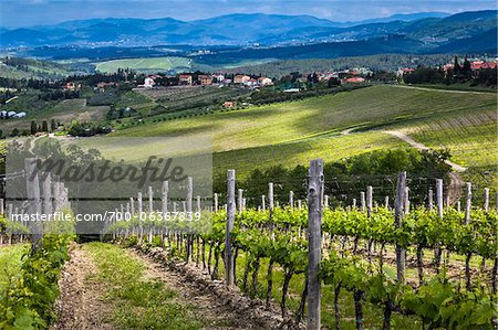 Vineyard, Chianti, Tuscany, Italy Stock Photo - Rights-Managed, Image code: 700-06367839
