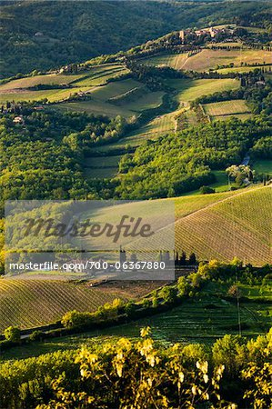 Farmland, Radda in Chianti, Tuscany, Italy Stock Photo - Rights-Managed, Image code: 700-06367880