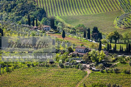 Vineyard, San Gimignano, Siena Province, Tuscany, Italy Stock Photo - Rights-Managed, Image code: 700-06367911