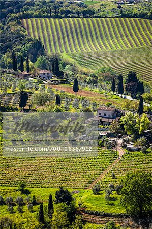 Vineyard, San Gimignano, Siena Province, Tuscany, Italy Stock Photo - Rights-Managed, Image code: 700-06367912