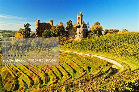 Ortenberg Castle and Vineyards in Autumn, near Offenburg, Ortenau District, Baden-Wurttemberg, Germany Stock Photo - Rights-Managed, Image code: 700-06397556