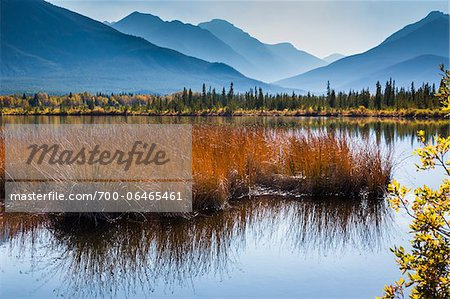Long Grass in Vermilion Lakes with Mountain Range in Background, near Banff, Banff National Park, Alberta, Canada Stock Photo - Rights-Managed, Image code: 700-06465461