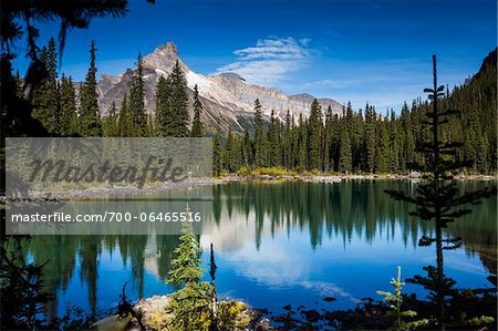 Mountain Range and Alpine Lake Lined with Evergreen Trees, Lake O'Hara, Yoho National Park, British Columbia, Canada Stock Photo - Rights-Managed, Image code: 700-06465516
