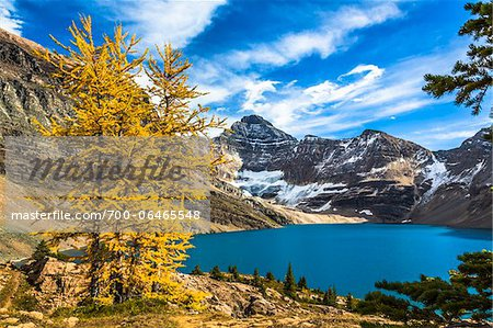 Autumn Larch at McArthur Lake, Yoho National Park, British Columbia, Canada Stock Photo - Rights-Managed, Image code: 700-06465548