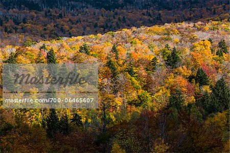 Overview of Forest in Autumn, Smugglers Notch, Lamoille County, Vermont, USA Stock Photo - Rights-Managed, Image code: 700-06465607