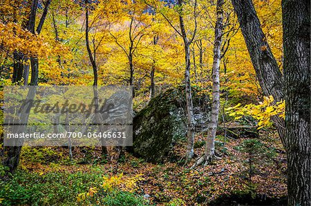 Boulders in Forest in Autumn, Smugglers Notch, Lamoille County, Vermont, USA Stock Photo - Rights-Managed, Image code: 700-06465631