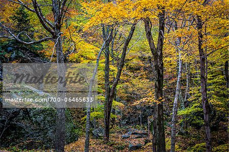 Boulders and Tree Trunks in Forest in Autumn, Smugglers Notch, Lamoille County, Vermont, USA Stock Photo - Rights-Managed, Image code: 700-06465633