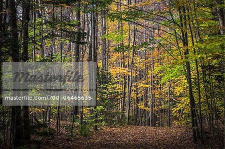 Hiking Trail Through Forest in Autumn, Moss Glen Falls Natural Area, C.C. Putnam State Forest, Lamoille County, Vermont, USA Stock Photo - Rights-Managed, Image code: 700-06465635