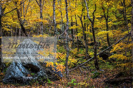 Boulder in Forest in Autumn, Smugglers Notch, Lamoille County, Vermont, USA Stock Photo - Rights-Managed, Image code: 700-06465637
