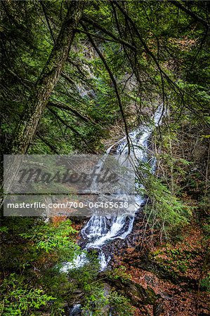 Waterfall and Evergreen Trees, Moss Glen Falls Natural Area, C.C. Putnam State Forest, Lamoille County, Vermont, USA Stock Photo - Rights-Managed, Image code: 700-06465638