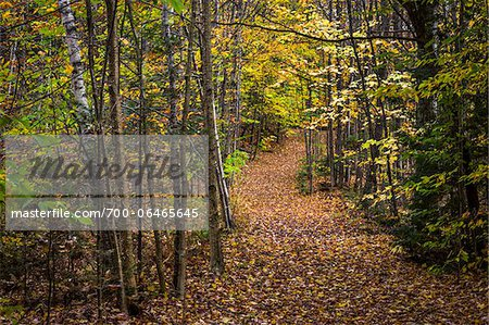Hiking Trail Through Forest in Autumn, Moss Glen Falls Natural Area, C.C. Putnam State Forest, Lamoille County, Vermont, USA Stock Photo - Rights-Managed, Image code: 700-06465645