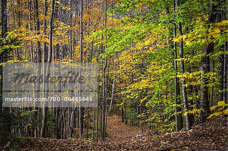 Hiking Trail Through Forest in Autumn, Moss Glen Falls Natural Area, C.C. Putnam State Forest, Lamoille County, Vermont, USA Stock Photo - Rights-Managed, Image code: 700-06465646