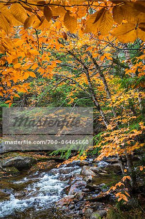 Rocky River and Autumn Leaves in Forest, Groton, Caledonia County, Vermont, USA Stock Photo - Rights-Managed, Image code: 700-06465660
