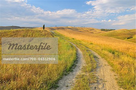 Path Through Field in the Summer, San Quirico d'Orcia, Province of Siena, Tuscany Italy Stock Photo - Rights-Managed, Image code: 700-06512906