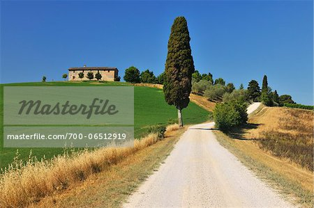 Rural Road with Cypress Tree in the Summer, Monteroni d'Arbia, Province of Siena, Tuscany, Italy Stock Photo - Rights-Managed, Image code: 700-06512919
