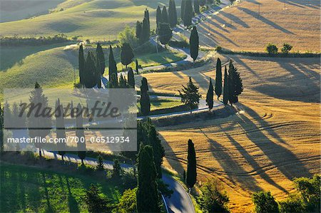 Winding Country Road with Cypress Trees in Summer, Montepulciano, Province of Siena, Tuscany, Italy Stock Photo - Rights-Managed, Image code: 700-06512934
