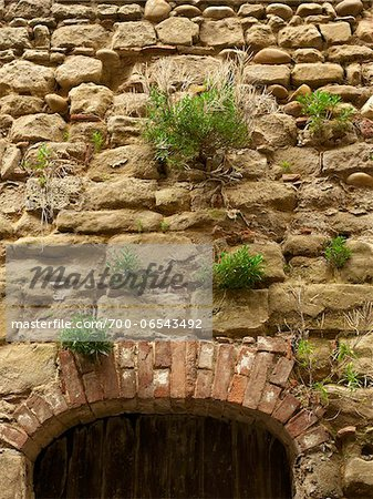 green plants growing out of stone bricks in wall above old arched doorway in the small medieval village of Saint-Antoine-l'Abbaye, France Stock Photo - Rights-Managed, Image code: 700-06543492