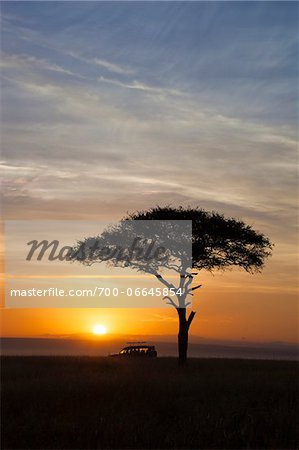 View of acacia tree and safari jeep silhouetted against beautiful sunrise sky, Maasai Mara National Reserve, Kenya, Africa. Stock Photo - Rights-Managed, Image code: 700-06645854