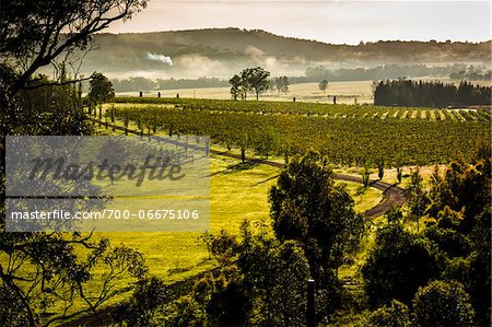 Overview of a vineyard in wine country near Pokolbin, Hunter Valley, New South Wales, Australia Stock Photo - Rights-Managed, Image code: 700-06675106