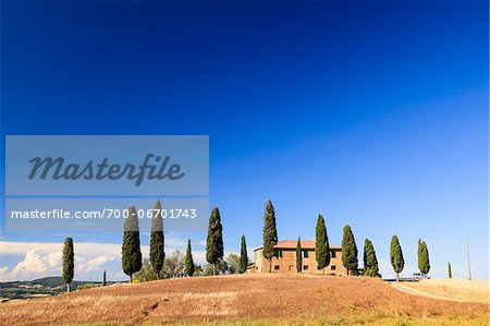 Cypress trees (Cupressus sempervirens) in front of Tuscan villa in summer, Val d'Orcia, Tuscany, Italy Stock Photo - Rights-Managed, Image code: 700-06701743