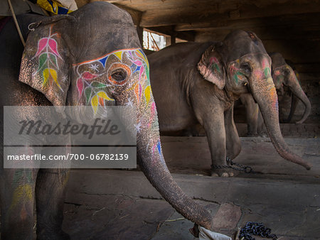 Decorated elephants in stable, Amber, India Stock Photo - Rights-Managed, Image code: 700-06782139