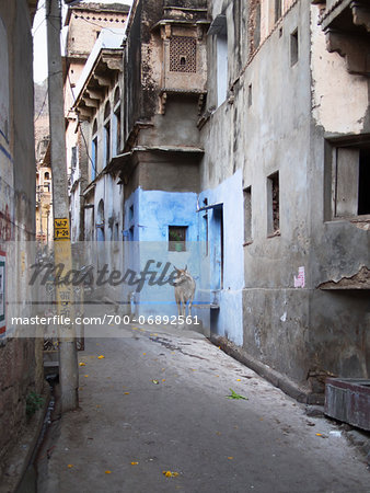 street view with sacred cow in old quarter of Binda, India Stock Photo - Rights-Managed, Image code: 700-06892561
