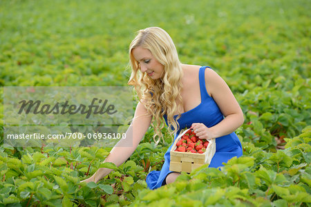 Young woman in a strawberryfield with a basket full of strawberries, Bavaria, Germany Stock Photo - Rights-Managed, Image code: 700-06936100