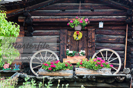 two old carriage wheels at log house with flowers for decoration