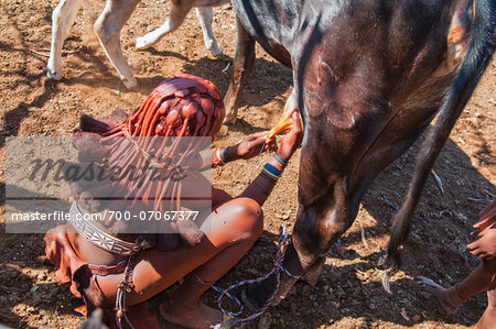 Himba woman milking a cow, Kaokoveld, Namibia, Africa , Namibia, Africa Stock Photo - Rights-Managed, Image code: 700-07067377