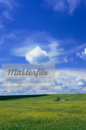 Pump Jack in Canola Field Stock Photo - Rights-Managed, Image code: 700-07199613