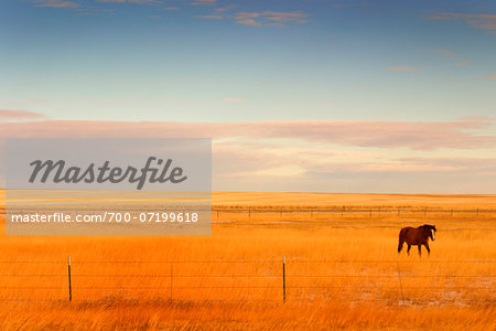 Horse in Field, Montana, USA Stock Photo - Rights-Managed, Image code: 700-07199618